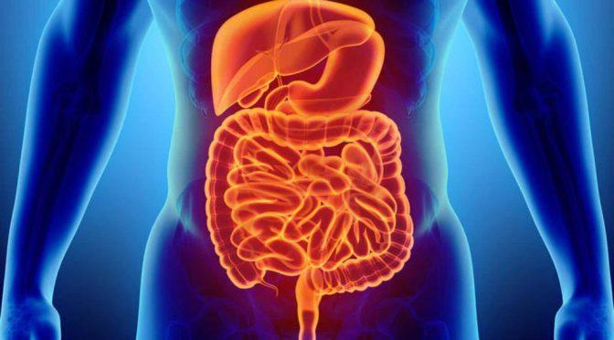 """Una investigación revela el funcionamiento de un """"segundo cerebro"""" en el intestino"""