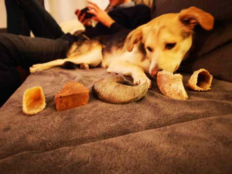 activités masticatoires chien