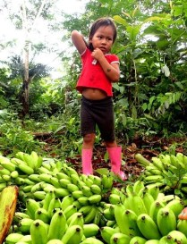 Collecting bananas in the jungle