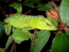 Amazon Rainforest Nature