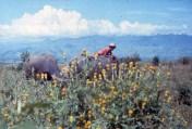 Arakan 1986