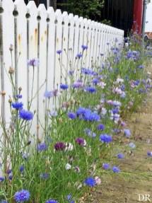 Beautiful Flower Garden Design Ideas 30