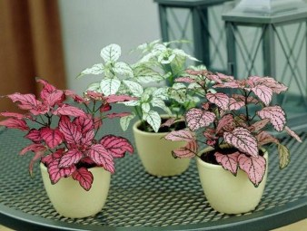 Stunning Small Planters Ideas To Maximize Your Interior Design 11