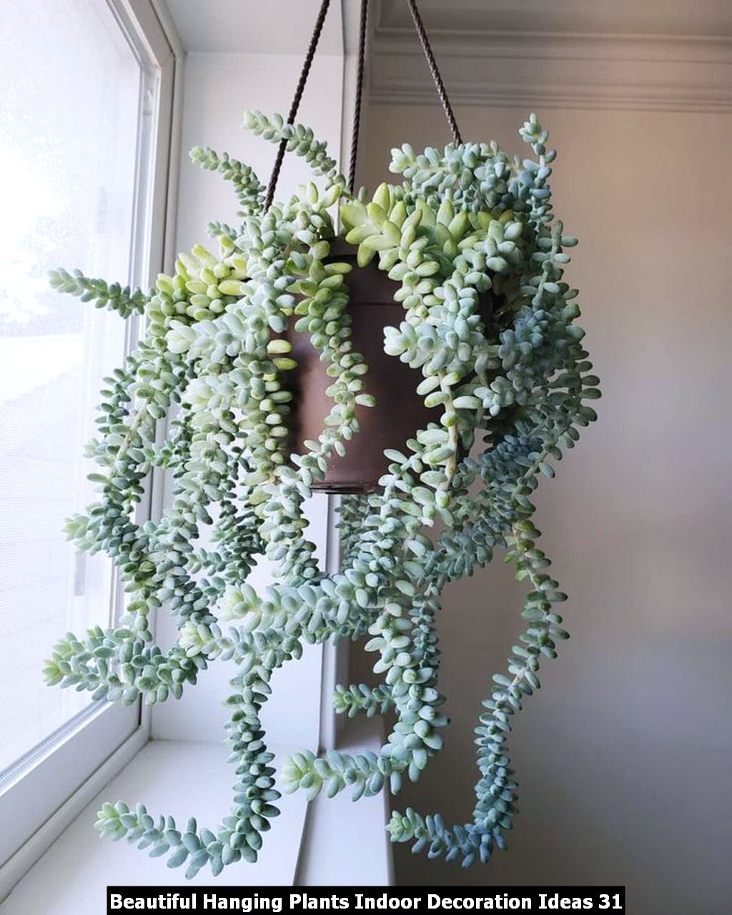 Beautiful Hanging Plants Indoor Decoration Ideas 31