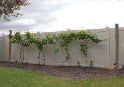 Backyard Grape Vine Trellis Designs