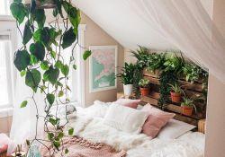 Plant Bedroom Ideas
