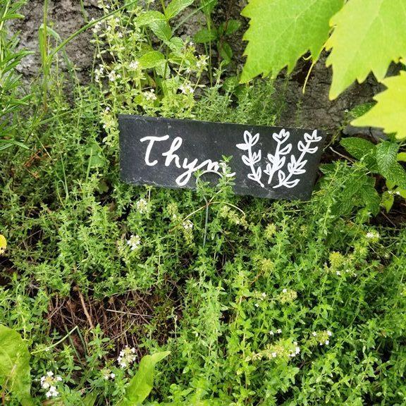 thym étiquette