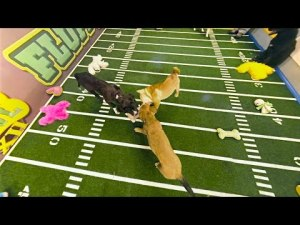 Three Puppy Tug of War | Puppy Bowl XII (360 Video) – YouTube