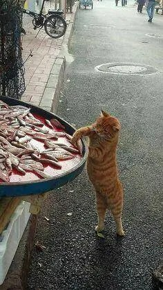 great image cat whats for supper A blog for the love of Pinterest