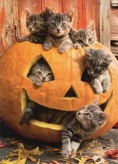 halloween 35 A blog for the love of Pinterest