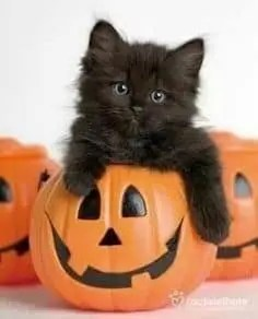 halloween 37 A blog for the love of Pinterest