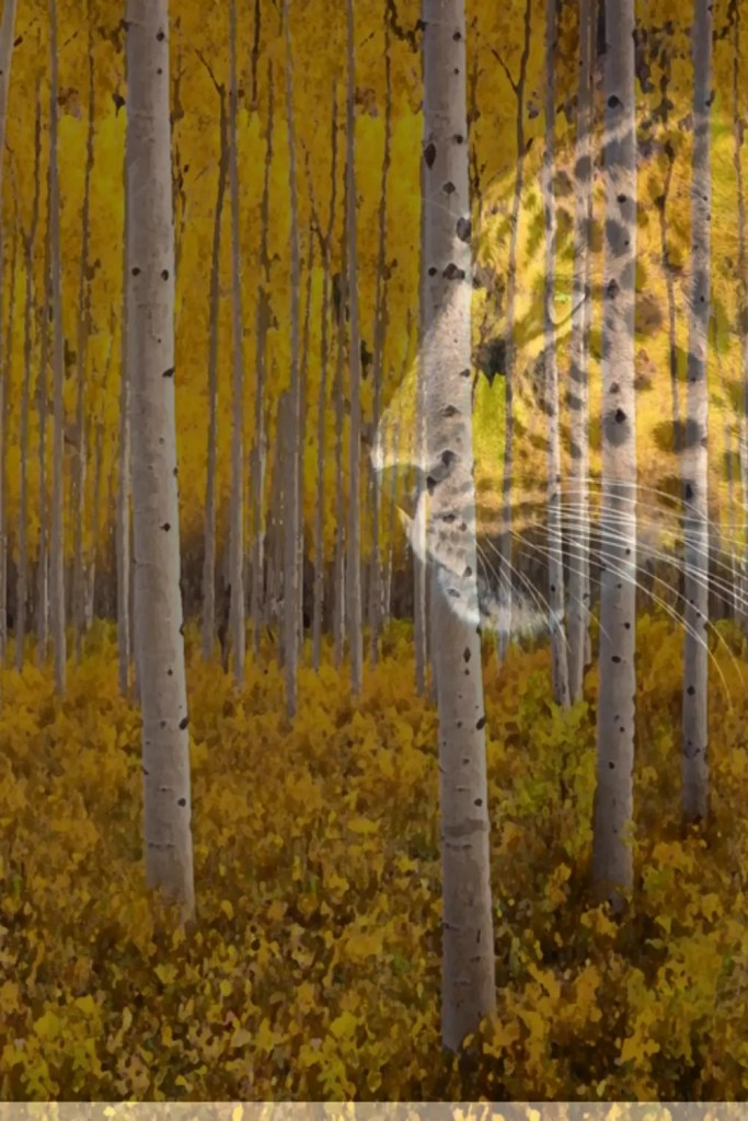Cheetah in the forest A blog for the love of Pinterest