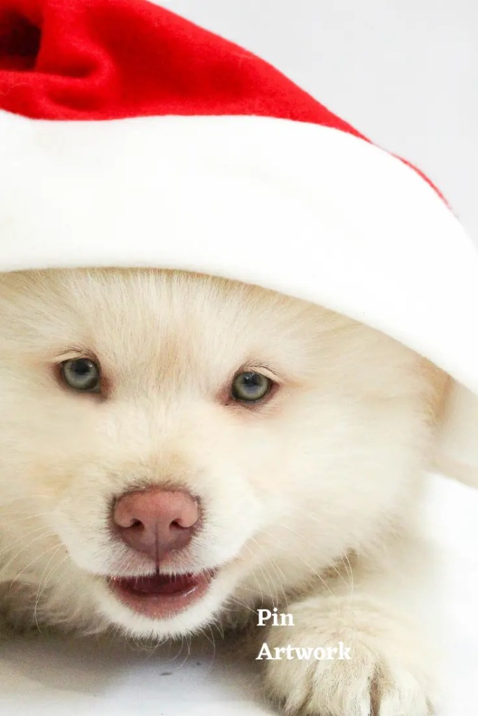 Santa Claus 7 A blog for the love of Pinterest