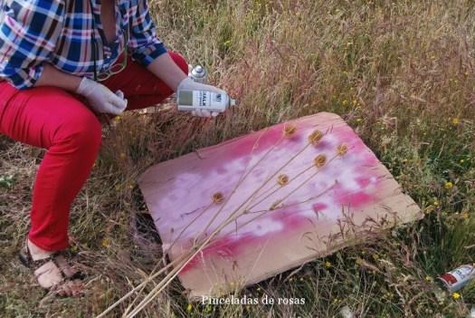 Cardos y Chakl Paint de Novasoljunio 2016 (8)