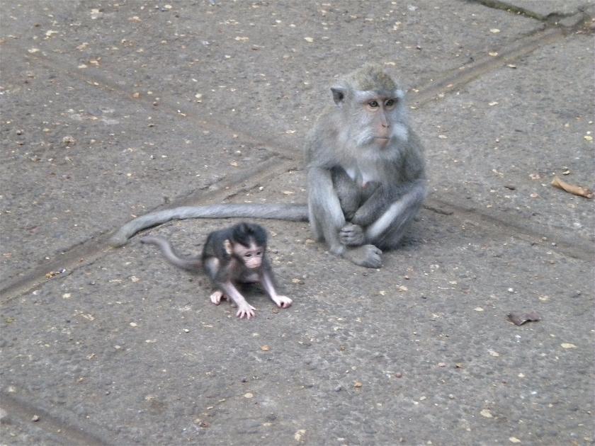 Monkey Forest, Bali, Indonesia