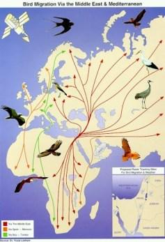 Рис. 6. Пути перелетных птиц