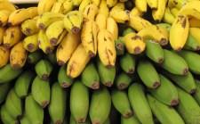 The best bananas u've ever tasted