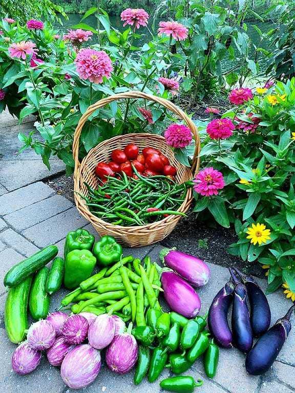 Best Vegetable Fertilizers W Chart