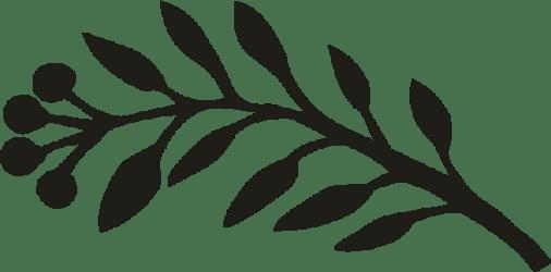 Transparent Leaf Border Black And White