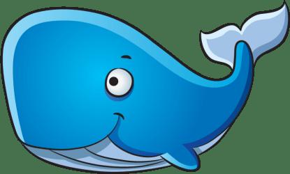 transparent whale cartoon porpoise humpback clipart pinclipart