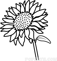Stem Drawing Sunflower Sunflower Picture For Drawing Clipart Full Size Clipart #950852 PinClipart
