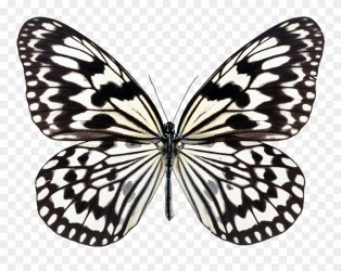 Simple Butterfly Black And White 1 Buy Clip Art Butterfly White Black Background Png Download #1420479 PinClipart