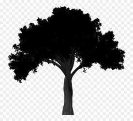 Oak Tree Silhouette Png Clipart 2829917 Pinclipart
