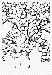 Outline Cherry Blossom Tree Drawing Clipart #5694340 PinClipart