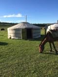 hest-og-ger