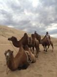 kameler