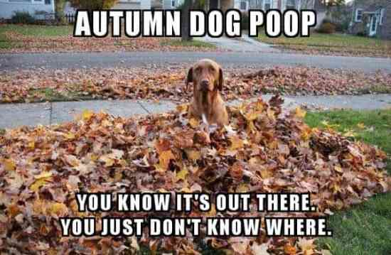 autumn dog poop