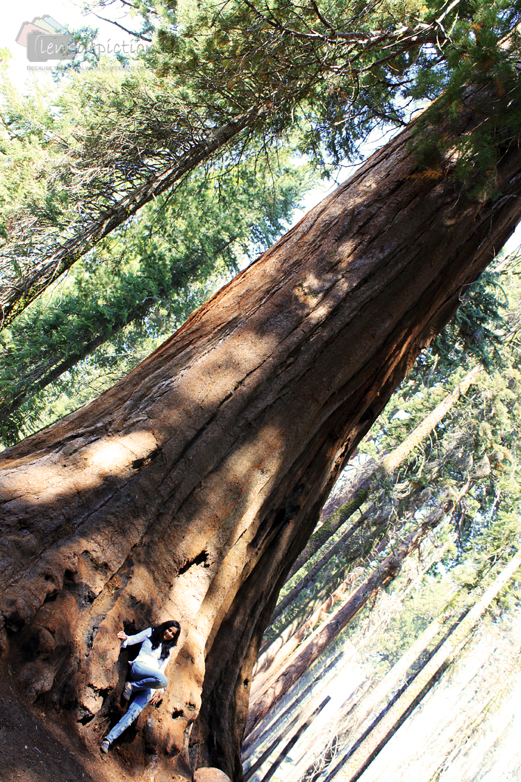 sequoia_blog