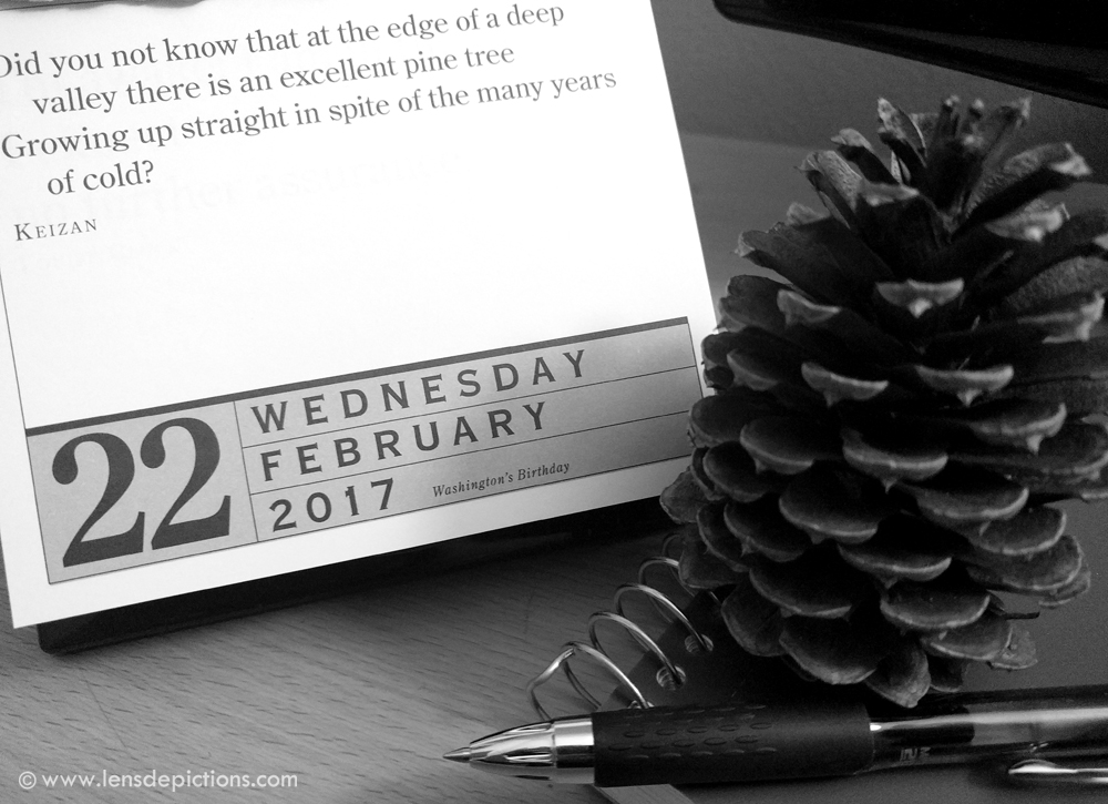pine-quote-lensdepictions
