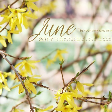 A Wise Forsythia & The Free Desktop Calendar Wallpaper for June 2017!