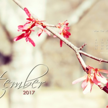 A Sunlit flower branch & September 2017 Free Desktop Calendar Wallpaper!