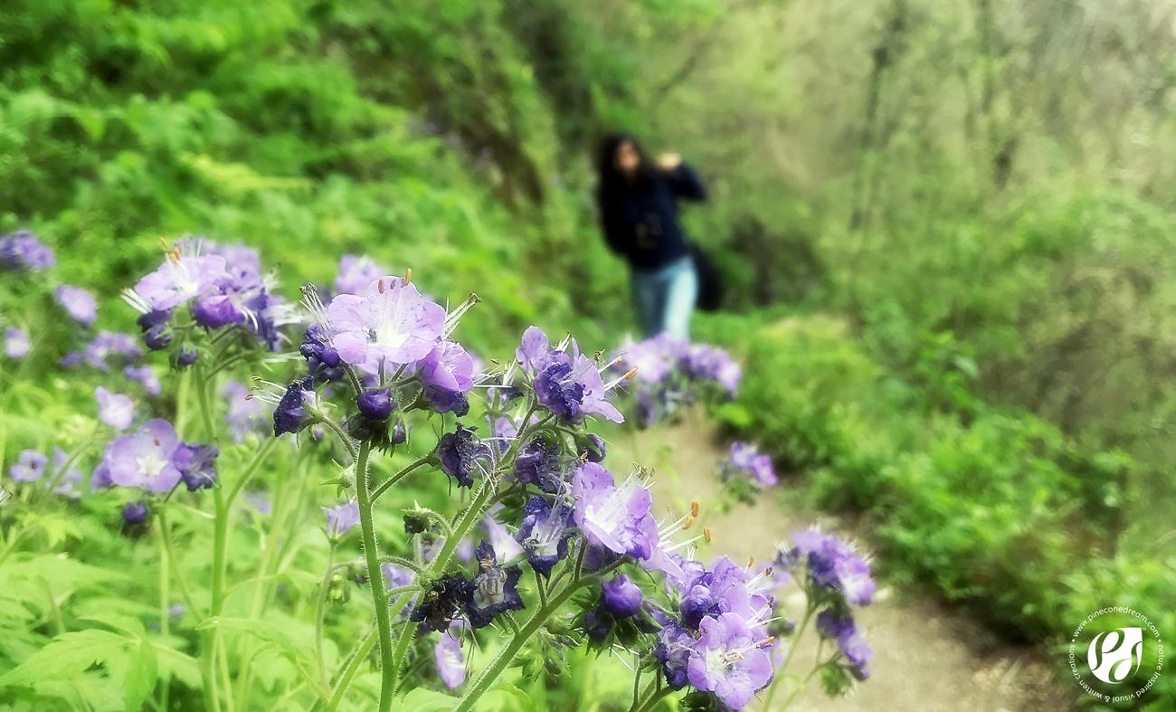 Smoky mountains wildflowers trip