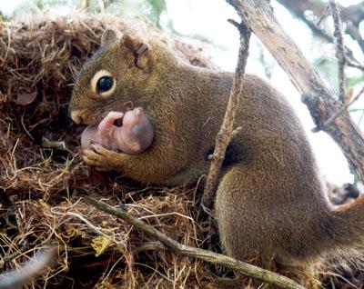 Squirrel-JWTaylor-Crop