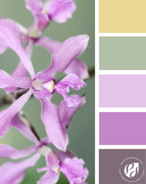 Color-palette-from-photos_Gentlepurple_pineconedream2