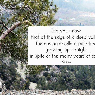 An Excellent Pine Tree – Inspirational Keizan Quote With Picture