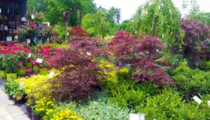 pinecrest nursery & landscaping