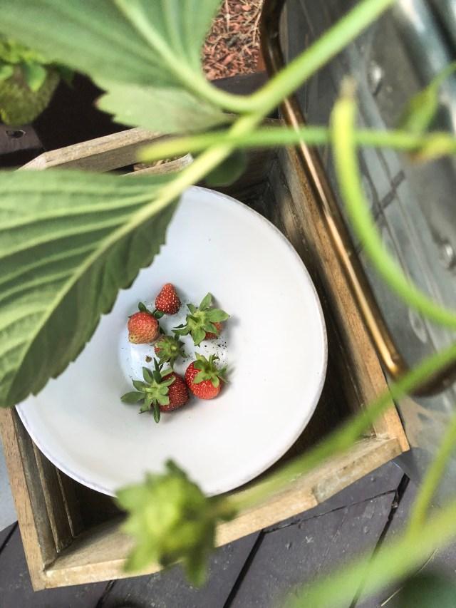 Our High Altitude Kitchen Garden ~ Part 2