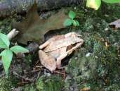 Cool tree frog