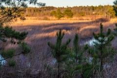 Pinelands