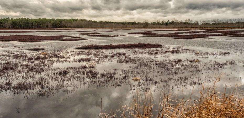 reeves-bog-pinelands