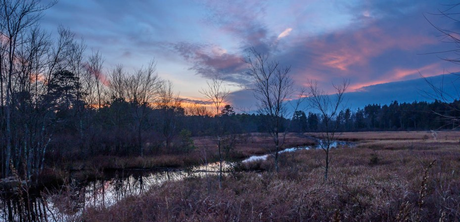 pine-lands-landscape-photo-110118