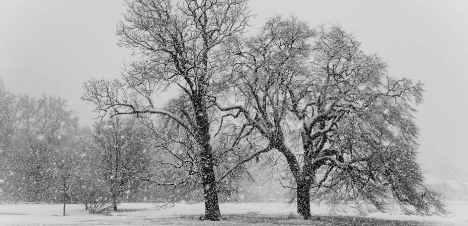 Sister Trees