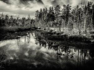 pinelands-b-w-photo