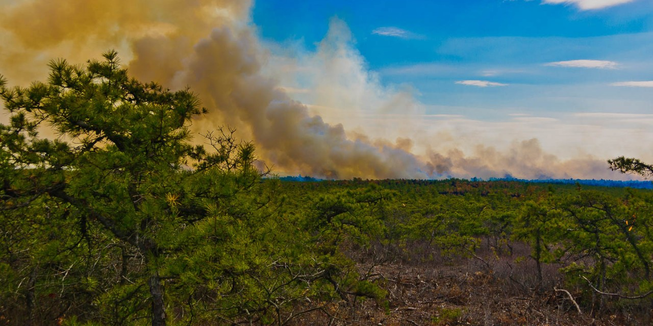 Pine Lands Controlled Burn
