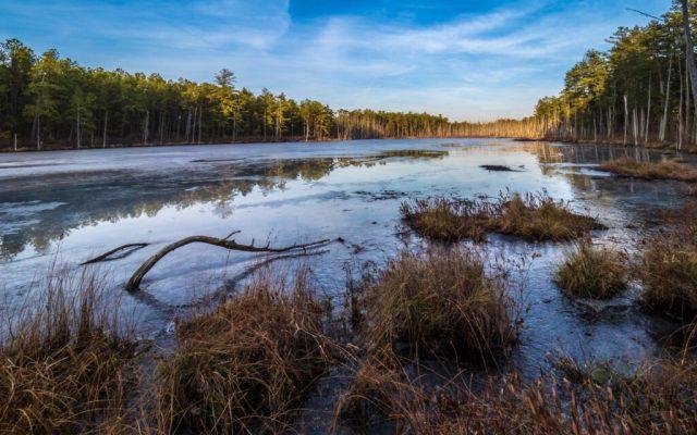 Pine Lands Winter Wonderland