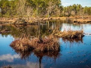 pine-lands--photo-3190109